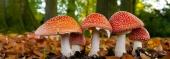 vereniging-homeopathie-nieuw-website-paars-oranje-webshop