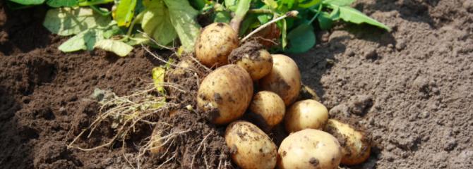 aardappels-aardolie-boek