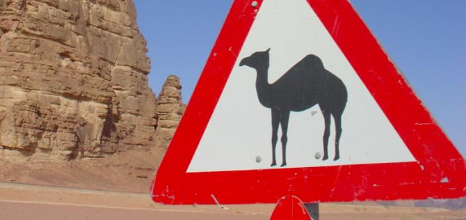 Jordanie-kameel
