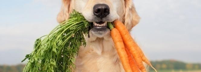 biologische diervoeding