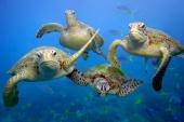 oceaanreservaat zeeschildpadden