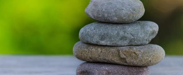 triphala wellness darmen