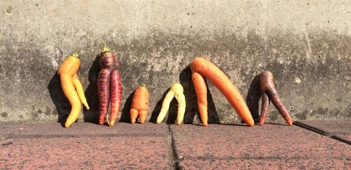 bijna-waste-geweest-groenten-fruit-redden