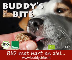 Buddysbite