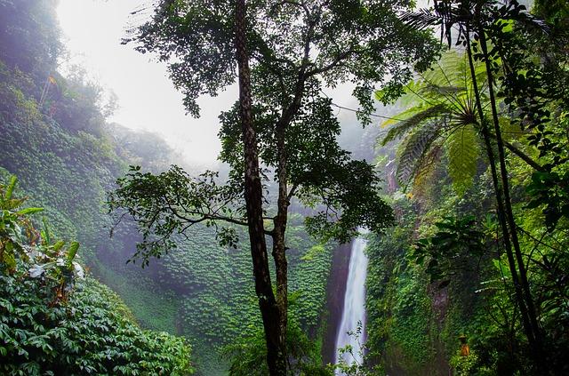 Sting en het regenwoud